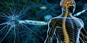 7th International Conference on Neurology and Neuromuscular Diseases , Madrid,Spain