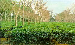Agroforestry & Landscaping