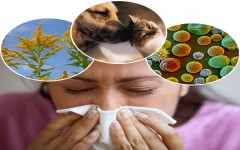 Allergy & Hypersensitivity