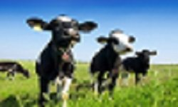 Animal  and Dairy Nutrition