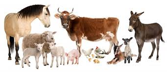 Animal Husbandry and Dairy Science