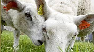 Animal Sciences and Genetics