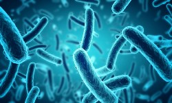 Microbiology and Bacteriology