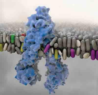 Bio-Pharmaceutics