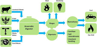 Biogas & Waste-to-Energy