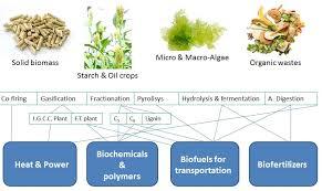 Biomass Processing Technologies