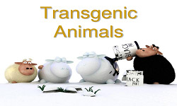 Biopharmaceutical Production in Transgenic Animals