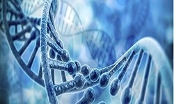 Cancer Epigenetics