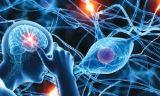 Cerebral and Neuronal Disorders