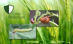 Crop Protection & Entomology