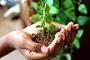 Environmental Sustainability and Development