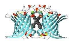 Enzymology & Biochemistry