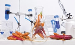Food Microbiology and Biotechnology