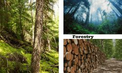 Forestry | Global Events | USA | Europe | Middle East | Asia Pacific