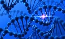 Genomes and Epigenomes