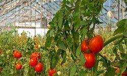 Greenhouse & Horticulture