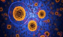 IMMUNOMODULATORY TREATMENTS IN EPILEPSY