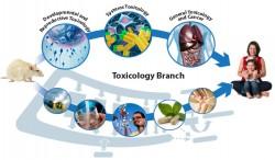 Immunotoxicology & Molecular Biomarkers