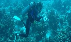 Marine Geology & Oceanography