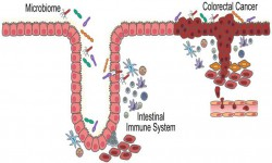 Clinical & Cellular Immunology