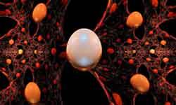 Nano Biomaterials