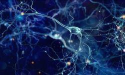 Neurochemical Transmission
