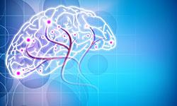 NEUROLOGY OF BRAIN