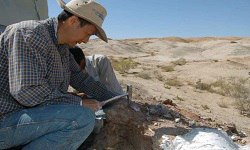 Paleontology & Paleo-anthropology