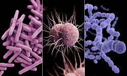 Emerging Infectious Disease Update