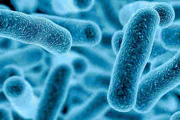 Pediatric Infectious Diseases