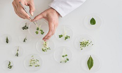 Plant Anatomy, Morphology and Molecular biology