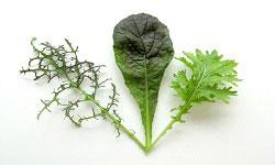 Plant Breeding and Molecular Breeding