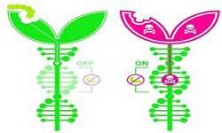 Plant Genetics and Epigenetics