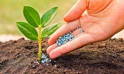 Plant Nutrition and Crop-Soil Sciences