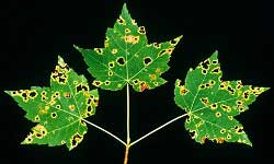 Plant Pathology and Plant-Microbe Biology