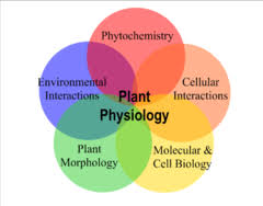 Plant Physiology and Pathology