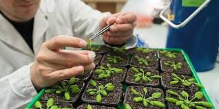 Plant Science Research