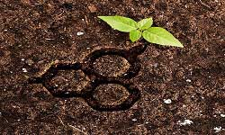 Soil science and soil-plant nutrition