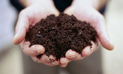 Soil Toxicology and Environmental Microbiology