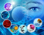 Stem Cell Engineering (SCE)