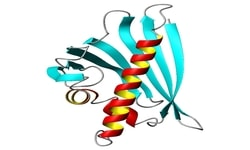 Structural biology databases