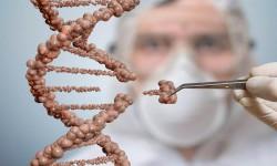 Transplantation & Computational Immunology