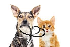 Veterinary & Animal Science