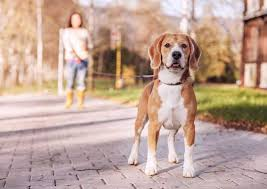 Veterinary Care & Management