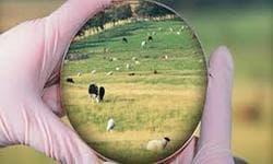 Veterinary Microbiology