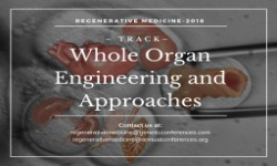 Whole Organ Engineering and Approaches