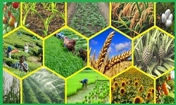 Global summit on Agriculture & Organic farming