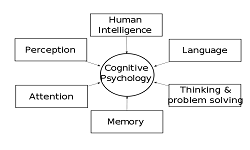 Cognitive psychology - Neurocognitive 2019