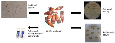 Evaluation of pinhao (Araucaria angustifolia) seed coat as source of