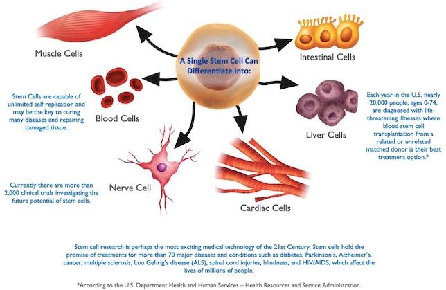 Cancer Stem Cell Conferences Cancer Conferences Stem Cell